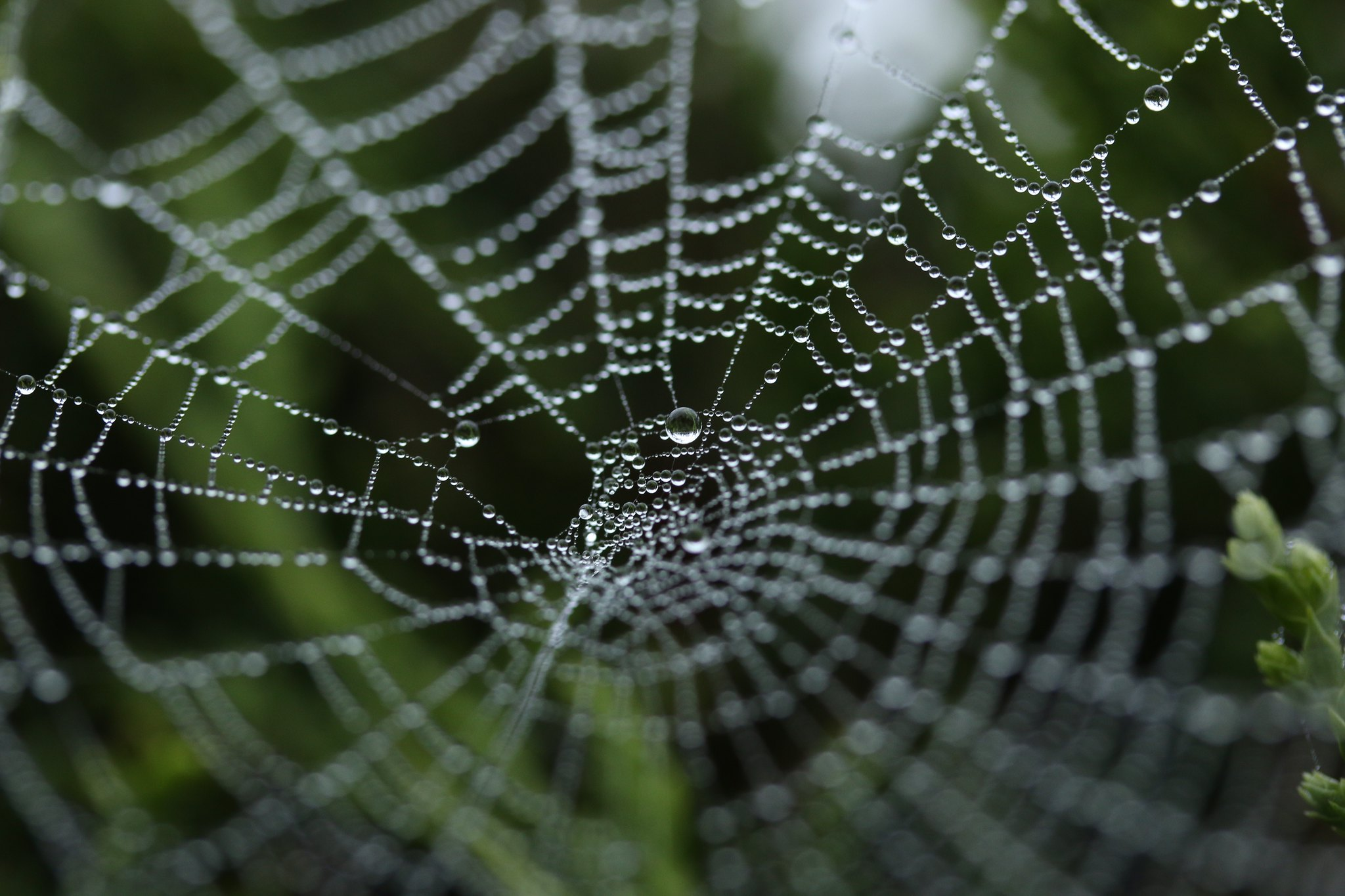 Spiders Silk